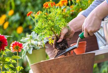 آموزش تعویض گلدان