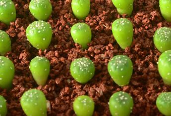 کاشت اصولی بذر کاکتوس