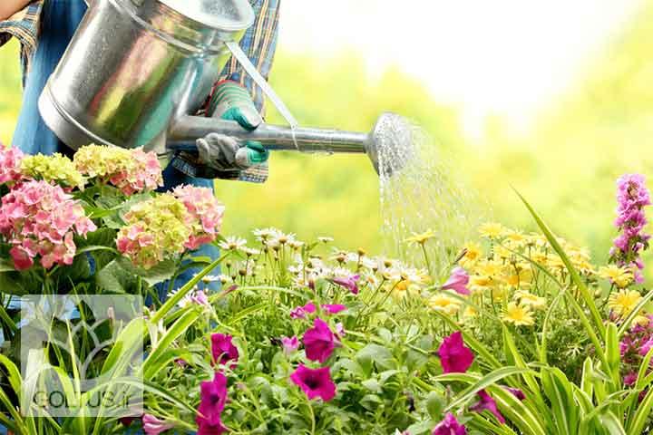 آبیاری گیاهان