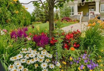 چگونه باغ زیبایی داشته باشیم